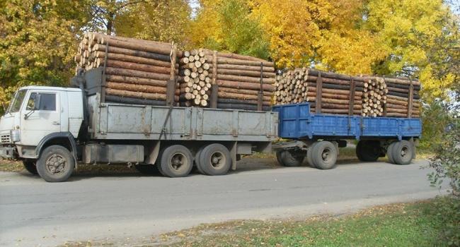 Журналист: украинские СМИ забывают упомянуть о том, что заявил Мингарелли о вывозе леса