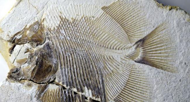 Учёные обнаружили останки древней рыбы