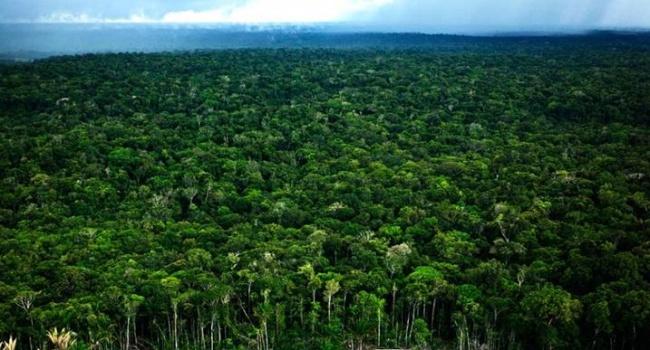 Глобальное потепление погубит амазонские леса