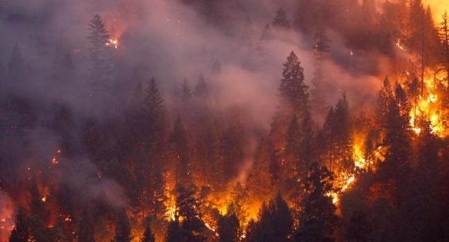 Пожары в Калифорнии: число жертв достигло 80