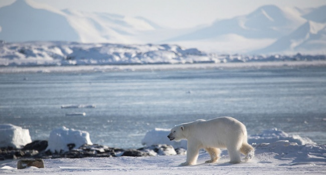 Ученые из России смогли доказать существование континента в Арктике
