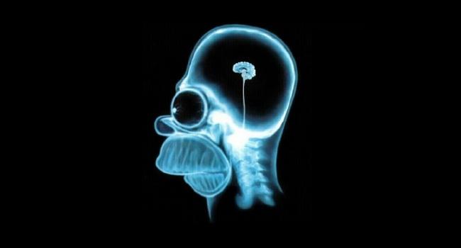 Количество жира в области живота определяет объём мозга человека