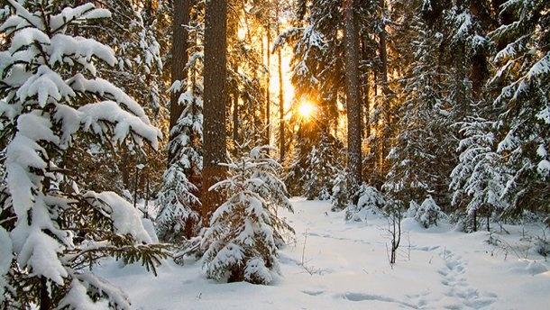 +9 та сонячно: синоптик порадувала гарною погодою на 10 лютого