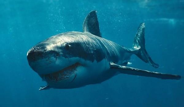 Сенсационное открытие ученых: акулы могут излечить рак