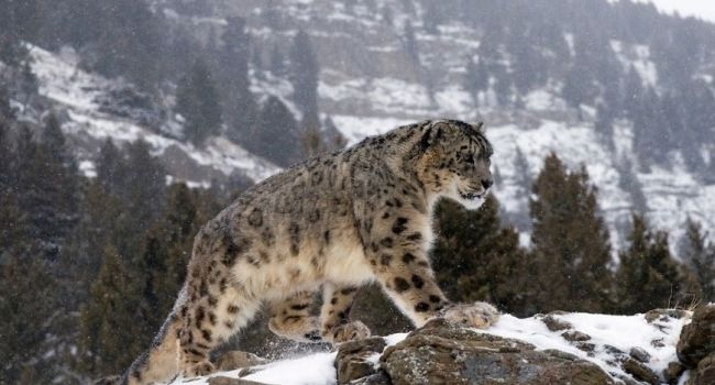 К 2070 году на планете исчезнут 1500 видов животных