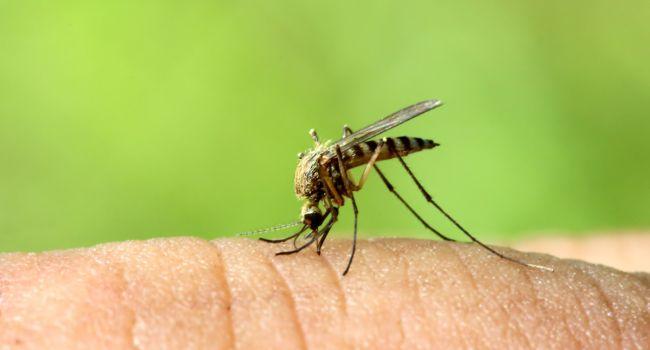 Ученые придумали эффективный механизм защиты людей от комаров
