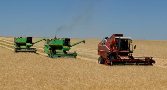 Аграрии рассказали об урожае в этом году