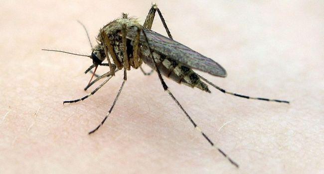 Ученые назвали группу крови, привлекающую комаров