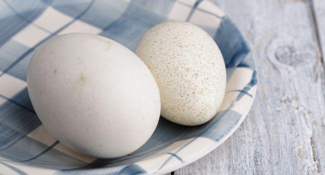 Гусиные яйца улучшают состояние здоровья курильщиков