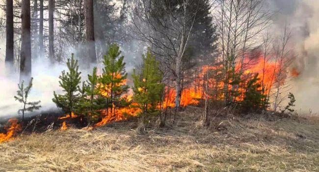 Спасатели полностью ликвидировали лесной пожар под Днепром