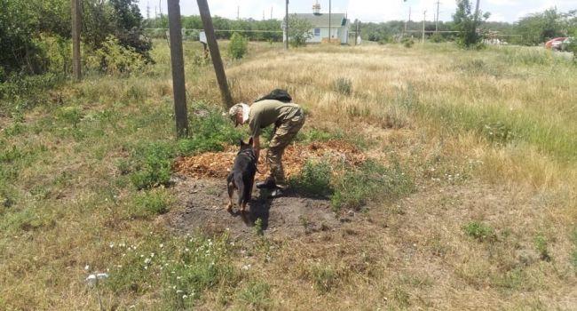 Загадочное исчезновение Дарьи Лукьяненко: полиция применила собак, обученных на поиск трупов