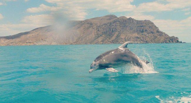 На Черноморском побережье Украины начали вымирать дельфины