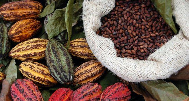 Для похудения и продления жизни: ученые рассказали об уникальных свойствах шоколада
