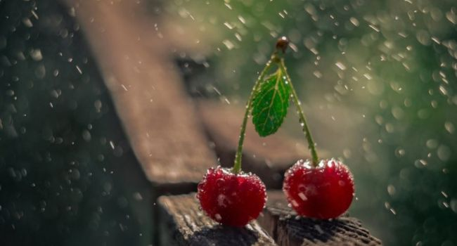 «Дожди, грозы и до +28»: синоптик рассказала о погоде 2 июля