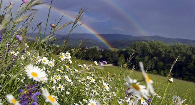 Комфортно и без дождей: синоптики рассказали о погоде 3 июля