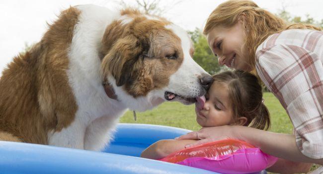 Собачья жизнь 2 - трогательный и добрый фильм