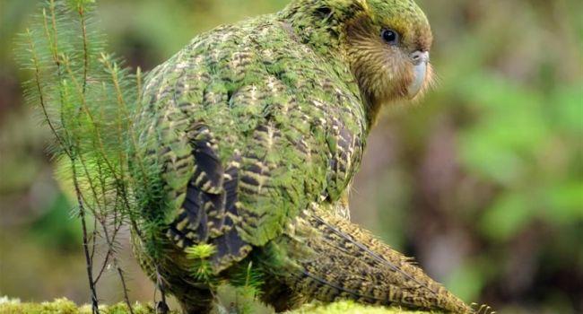Ученые обнаружили останки гигантского попугая, - видео