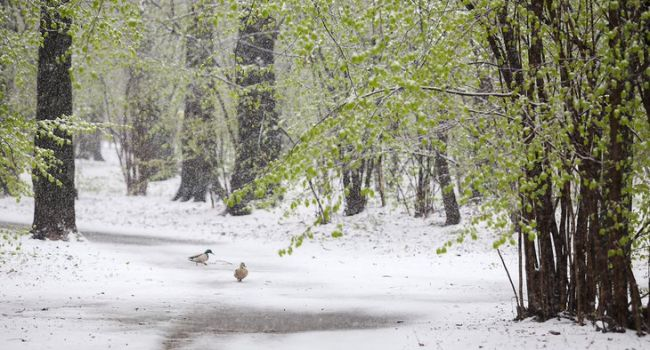 В Канаде выпало рекордное количество снега, - абсолютная аномалия