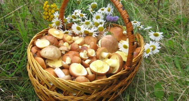 Выбирайте очень осторожно: эксперт рассказала о пользе грибов