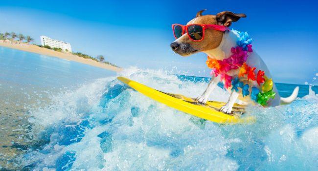 Психологи призывают регулярно ходить в отпуск