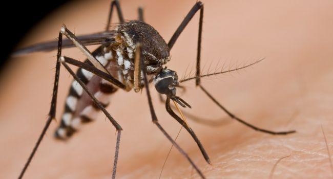 Может коснуться и Украины: эпидемиологи заявили о возможном нашествии опасных насекомых в России