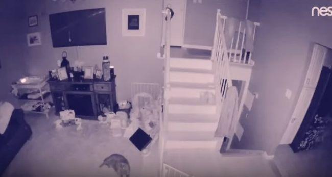 Камеры наблюдения зафиксировали призрак маленького мальчика и его домашнего любимца: видео загадочного явления