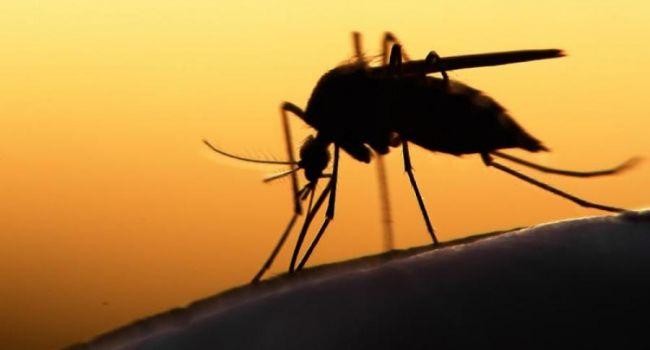В Крыму высадились тучи комаров с Нибиру, зараженных вирусами смертельных заболеваний - уфологи