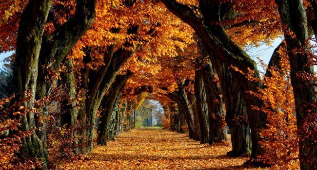 Золотая осень будет два раза: Синоптики рассказали, когда ждать бабьего лета