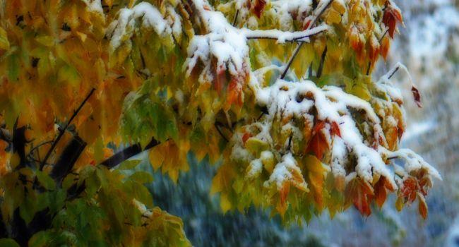 Мокрый снег и похолодание: Гидрометцентр шокировал прогнозом на следующую неделю