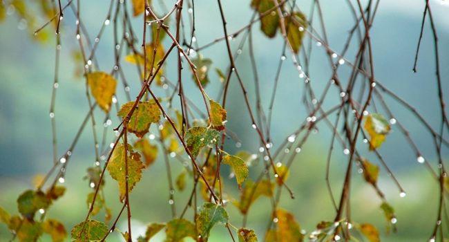 Дожди и холод, будет еще хуже: синоптики предупреждают о непогоде