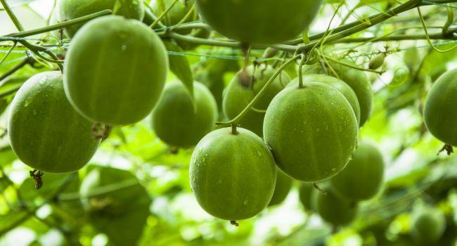 Омолаживает и усиливает стволовые клетки: ученые из Китая назвали самый полезный фрукт