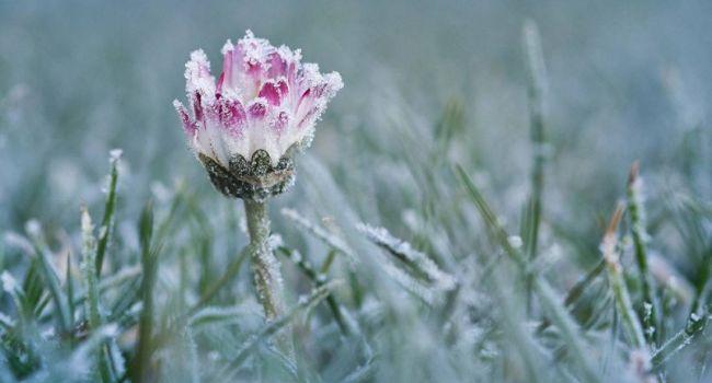 «Ожидаются заморозки»: в пятницу Украину накроют дожди, а температура воздуха опуститься до 0 градусов