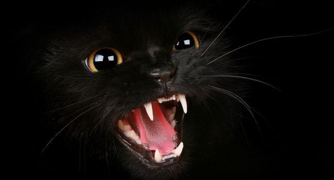 Домашние... убийцы: Коты способны заразить хозяев смертельно опасным заболеванием