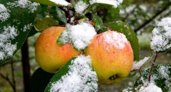 «Дожди, морозы и снег»: синоптик рассказал о погоде на ноябрь
