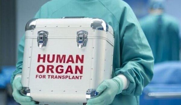 Скалецкая рассказала, когда в Украине заработает трансплантация