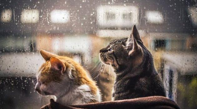 Синоптик розповіла, коли в Україну прийде холодна погода
