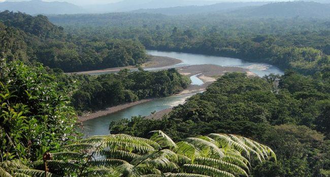 Остаётся всего два года: Ученые сообщили о гибели лесов Амазонии