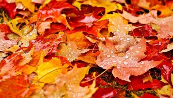 Температура поднимется выше нормы: синоптик рассказал о грядущем потеплении на следующей неделе