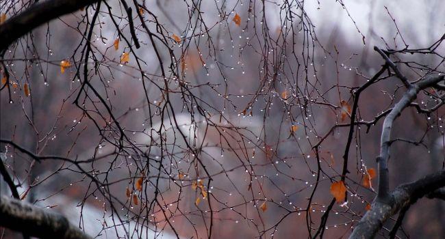 «У природы нет плохой погоды»: Как пережить дождливые дни