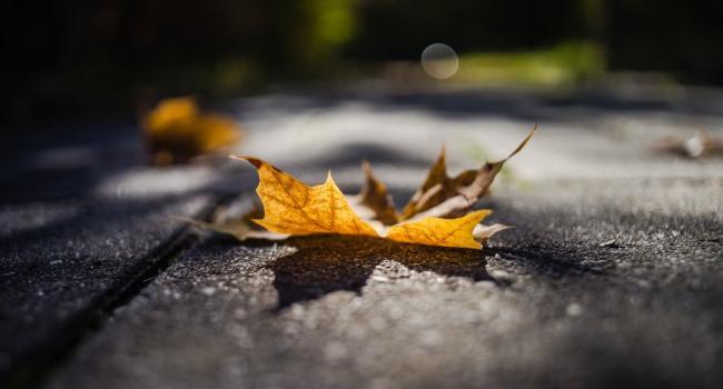 Немного дождей и апрельское тепло: Какой будет погода 14 ноября