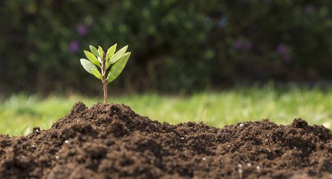 «Будет обузой для всех селян»: Общественный деятель рассказал, чем обернется земельная реформа