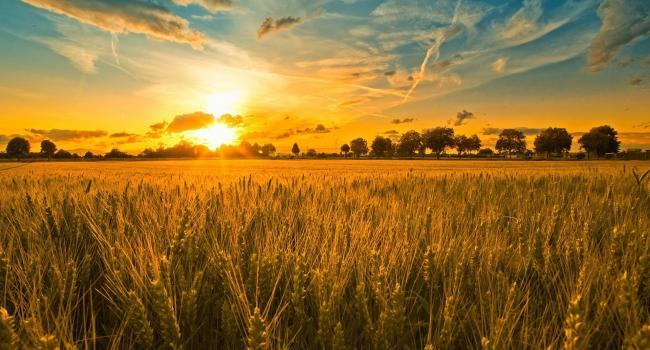 «Всю украинскую землю могут скупить 200 человек»: Журналист указал на риски, связанные с земельной реформой