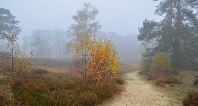 Будьте осторожны: В Гидрометцентре предупредили о леденящем ветре 21 ноября