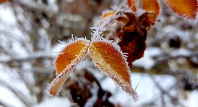 «Снега в ближайшее время не ожидаем»: стало известно о погоде на выходные, 23-24 ноября