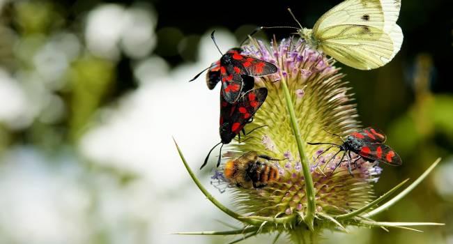 Это не климатические изменения: Ученые назвали причину массового вымирания насекомых