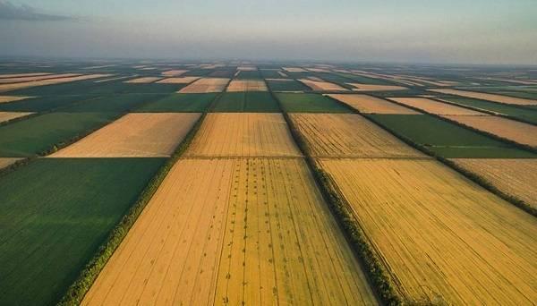 В референдуме нет необходимости: власти пошли на хитрый шаг по запуску рынка земли