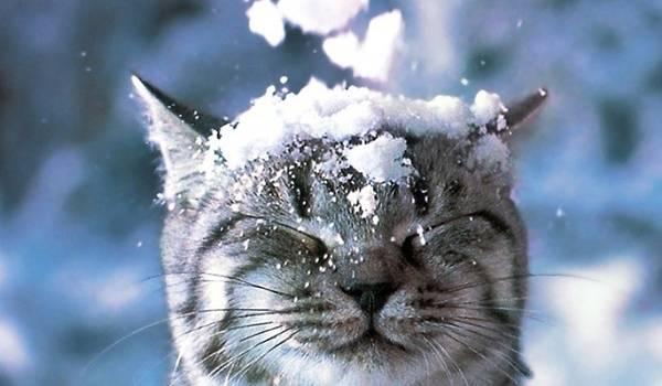Дожди в сопровождении снега: синоптики рассказали о погоде в первый день зимы