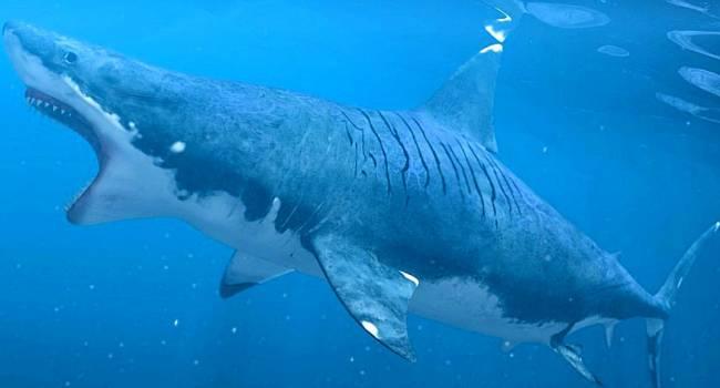 Спустя много лет, ученым наконец удалось выяснить подробности об акулах-людоедах