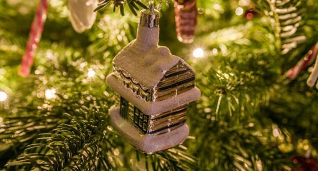 Это не елка и не сосна: астрологи рассказали о лучшем новогоднем дереве в этом году