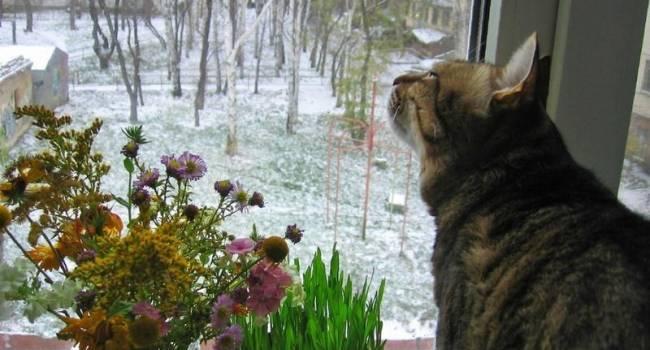 Не по-декабрьски жарко: в Гидрометцентре снова удивили прогнозом